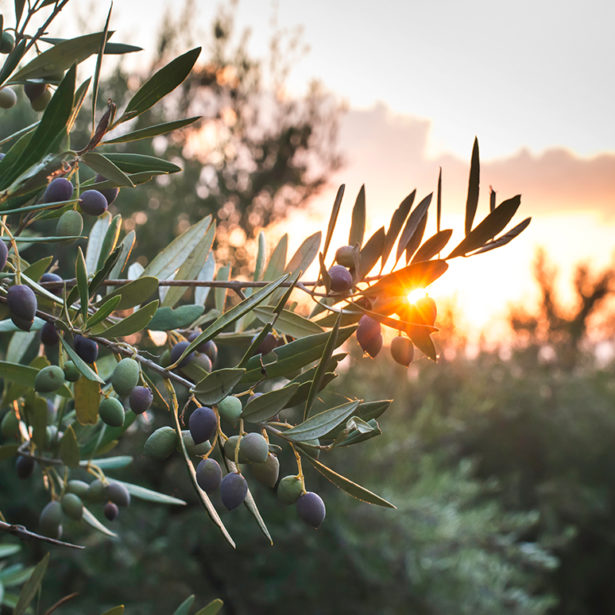 What are the varieties of olive oil?