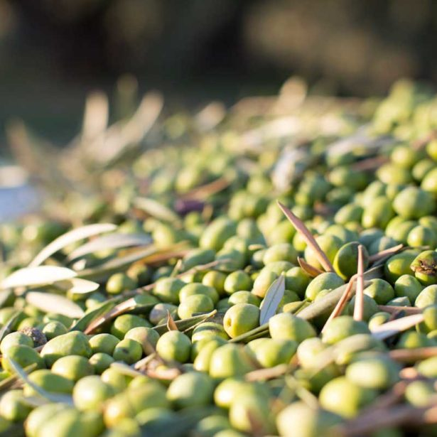 Do you know all the benefits of olive oil?