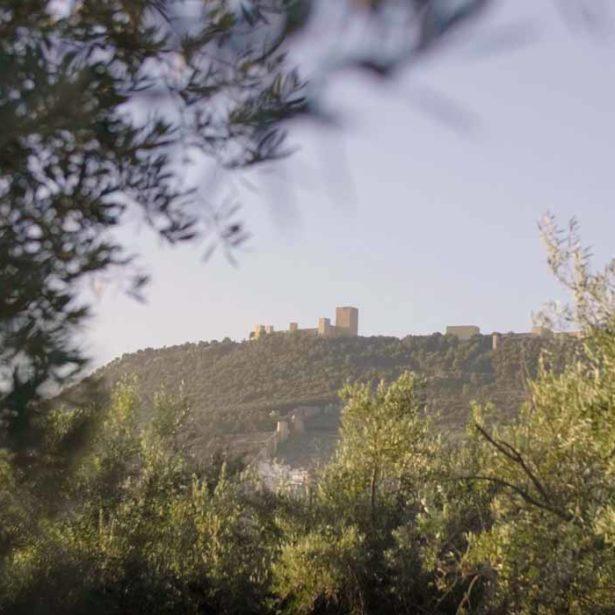 Del árbol a tu cocina: aceite de Jaén a domicilio con Fuenquesada
